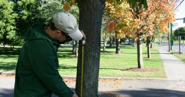 Measuring a tree for Nature Up North's maple monitoring project.