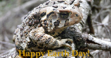 "Toad with words ""Happy Earth Day!"""
