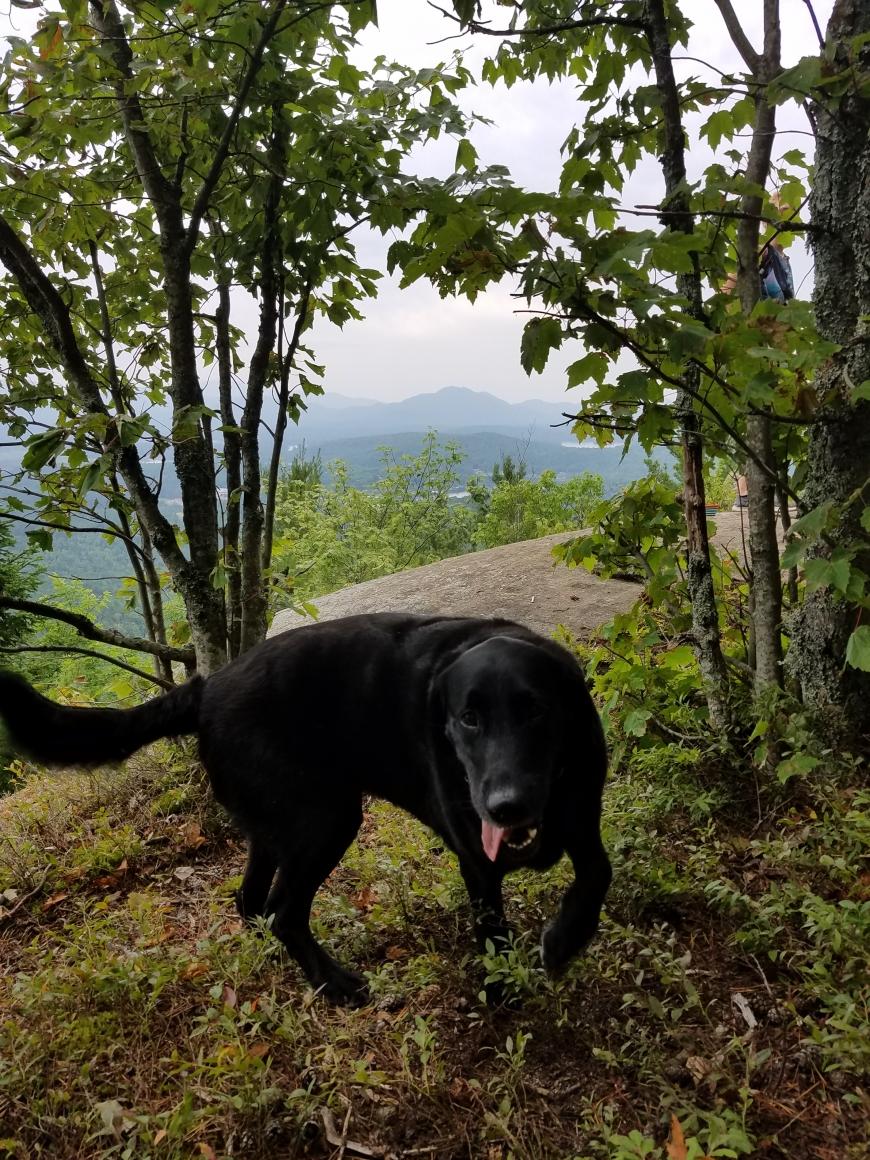 Adirondacks   Nature Up North