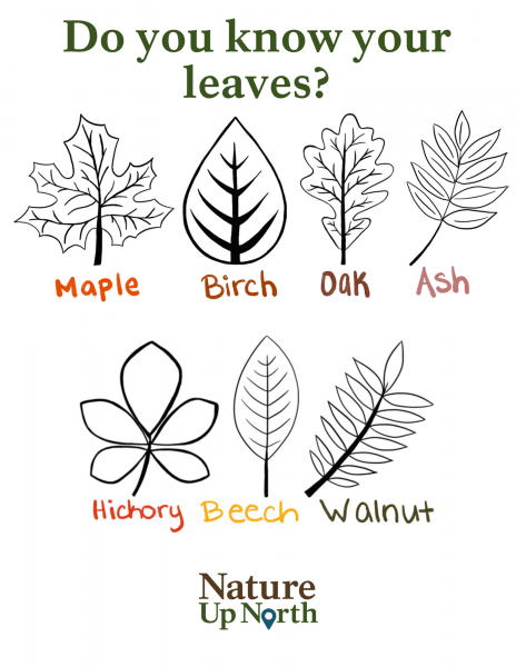 Do you know your leaves Coloring page