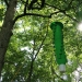 A green emerald ash borer trap issued by New York State hangs in an ash tree.