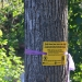 "A yellow DEC sign reading ""Help Save New York's Ash Trees!"" tied to an ash tree in Canton"