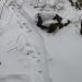 Otter slide tracks in snow